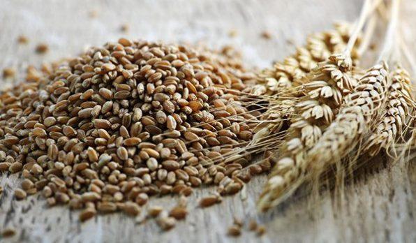 Espigas de triticale al lado de un montón de granos sueltos de triticale